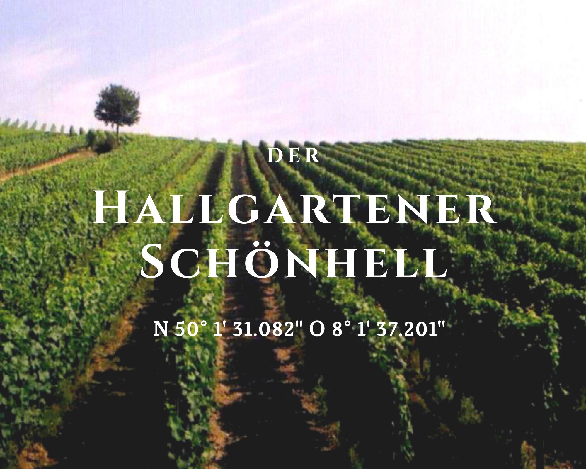 Klassischer Rheingau aus dem Hallgartener Schönhell